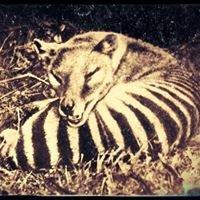 Mammalian - Australian Wildlife