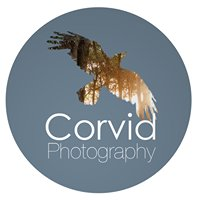 Corvid Photography