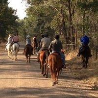 Nash Horse Trekking