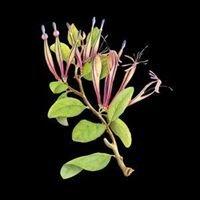 New Zealand Plant Conservation Network (NZPCN)