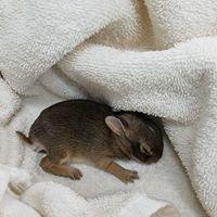 Childersburg Pet Clinic PC
