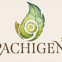 Pachigen