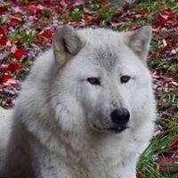 Wolf Mountain Nature Center