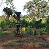 Camara's Nursery and Vegetable Garden