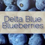Delta Blue Blueberries: Stockton, CA Blueberry Harvest