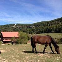 Horseshoe Canyon Climbing Ranch