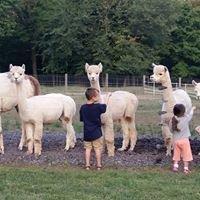 Harley Hill Farm Alpacas