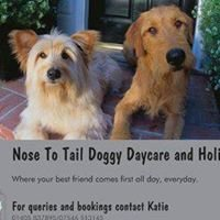 Nose To Tail Doggy Daycare and Holiday's