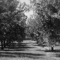 Shade Tree Farm and Orchard