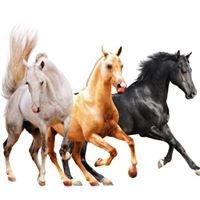 Wild Horse Tales