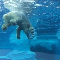 Polar Bear Exhibit at Detroit Zoo