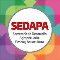 Sedapa Oaxaca