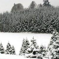 Reichen Christmas Tree Farm