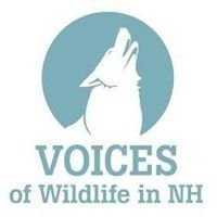 Voices of Wildlife in New Hampshire