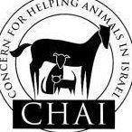 Concern for Helping Animals in Israel (CHAI)