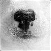 Paw Print Pet Photography