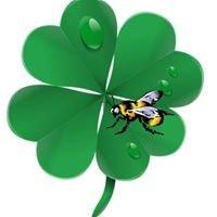 Shamrock's Buzzy Bee