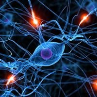 Neurology Associates/The MS Center of Greater Orlando