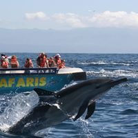 Ocean Safaris - Plettenberg Bay - Whale and Dolphin watching