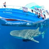 The Smiling Seahorse Dive Centre, Ranong, Thailand