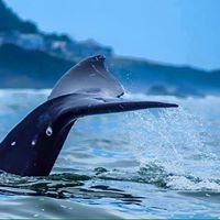 Whale Research Eco Excursions