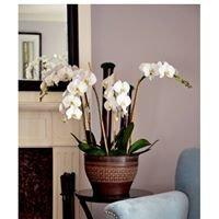 Orchidia Design