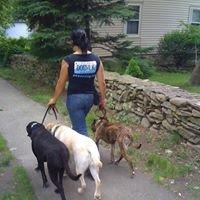 Peace Dog Canine Care Services