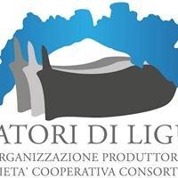 Pescatori di Liguria Organizzazione Produttori