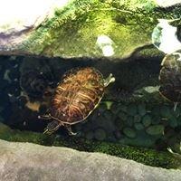 Marine Science Center Turtle Hospital