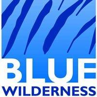 Blue Wilderness Shark Adventures