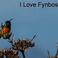 Fynbos Endemic Bird Cycle Survey