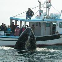Freeport Whale & Seabird Tours