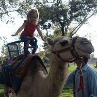 Camels Unlimited