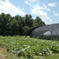 Fresh Harvest, LLC