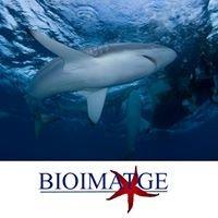 Bioimatge