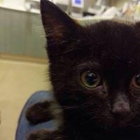Alderney Animal Welfare Society