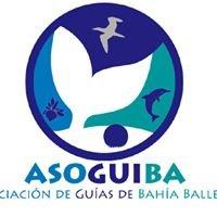 Asociacion de Guias de Bahia Ballena (ASOGUIBA)