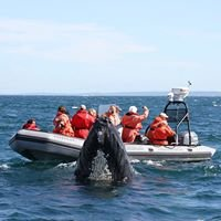Brier Island Whale and Seabird Cruises
