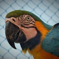 Birds Park. Hambantota.Sri Lanka