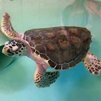 NOAA Fisheries Service Sea Turtle Facility