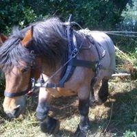 Horse Force Logging