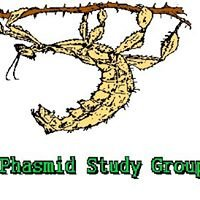 Phasmid Study Group (PSG)