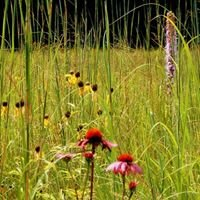 Prairie Ecosystems Management