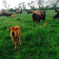Grassroots Bison Ranch, LLC
