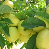 Fieldbrook Valley Apple Farms