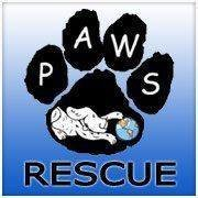 Paws Rescue Group