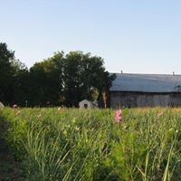 McBrides Organic Farm