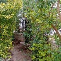Garden Solutions-Beit Shemesh Israel גינון בית שמש