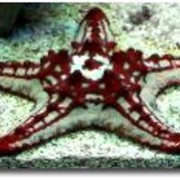 Atlantis Marine Fish & Supplies