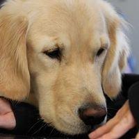 Caredogs - tiergestützte Interventionen mit dem Therapiebegleithund